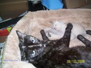 Kittens 024