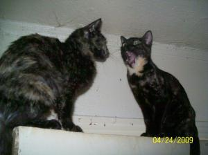 Smokie Talking to Patches